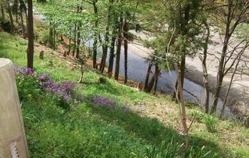 近所の川.jpg